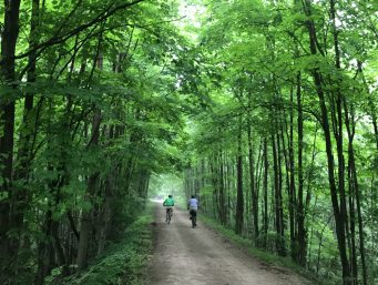 Two cyclists along a wooded dirt path